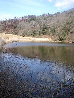真冬の野池めぐり in HIROSIMA!_e0100021_3331271.jpg