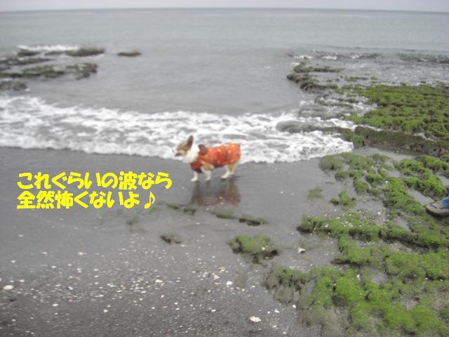 f0182121_1015334.jpg