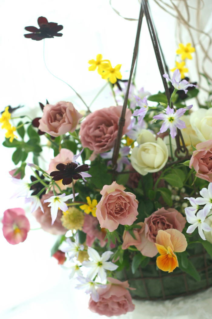 リューココリーネ 花の名前_a0042928_2236926.jpg