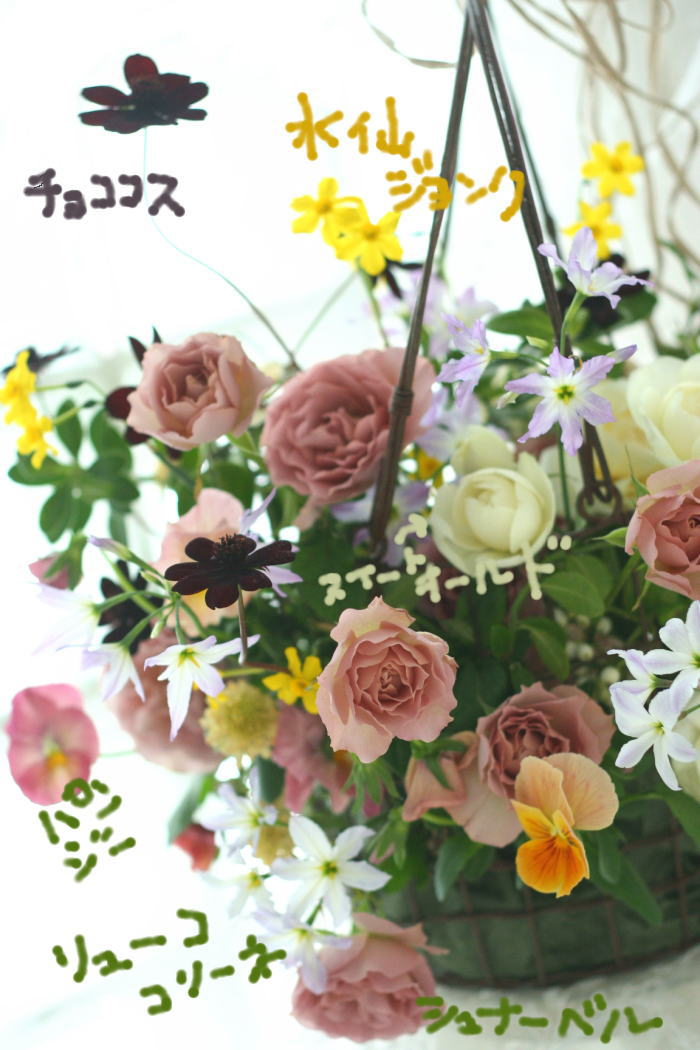 リューココリーネ 花の名前_a0042928_22432888.jpg