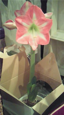 開花!_b0071355_0333051.jpg