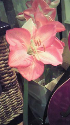 開花!_b0071355_0333851.jpg