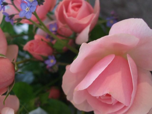 オークリーフ(お誕生日の花束)_f0049672_17312636.jpg