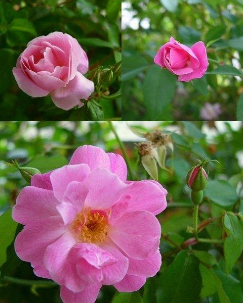 我が家の庭も春爛漫 ☆今日のお弁当♪_c0139375_13505789.jpg