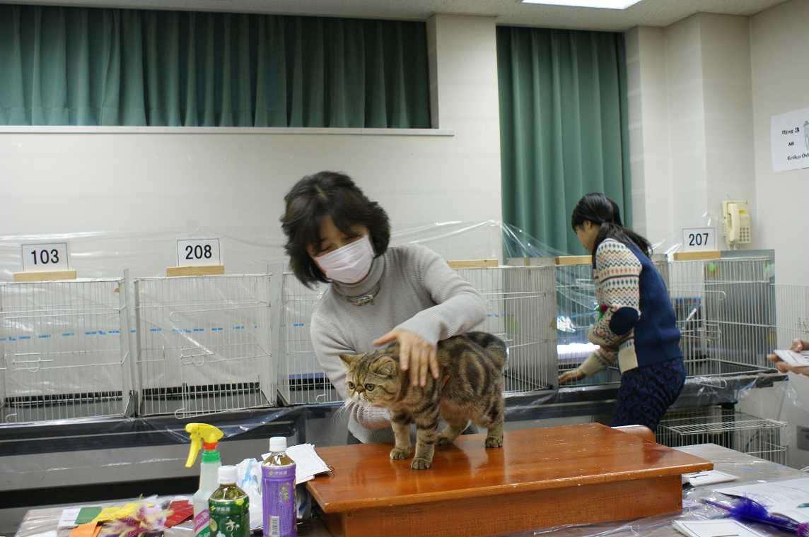 TICA-ACC CAT SHOW_e0033609_20254386.jpg