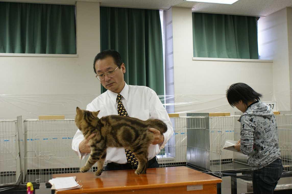 TICA-ACC CAT SHOW_e0033609_202834.jpg