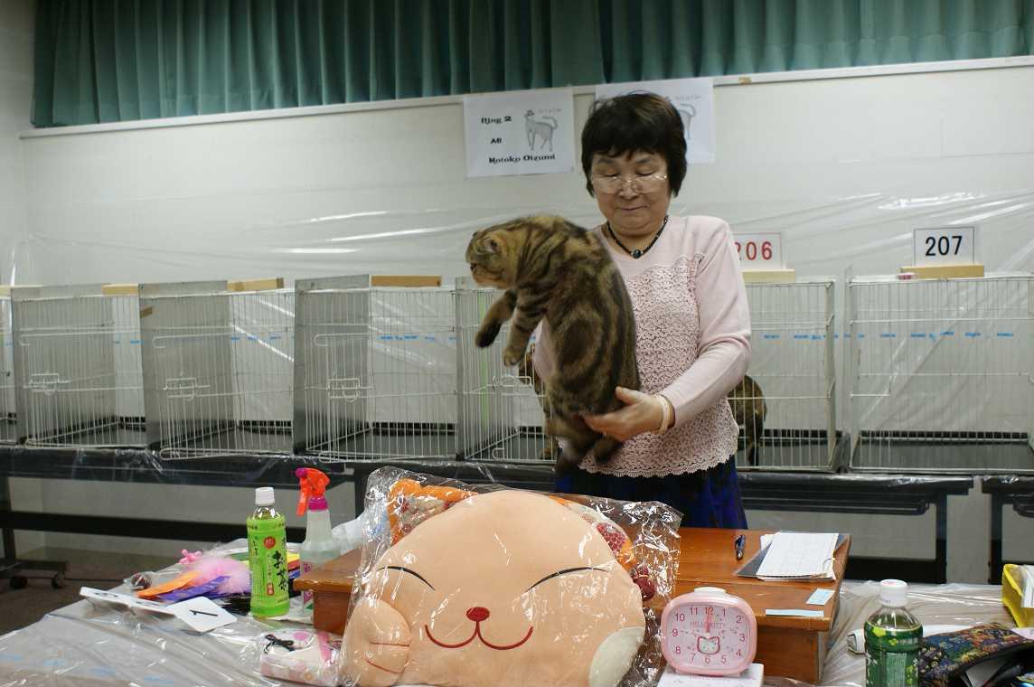 TICA-ACC CAT SHOW_e0033609_20284513.jpg