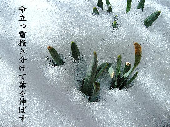 植物の命_e0099713_20523821.jpg