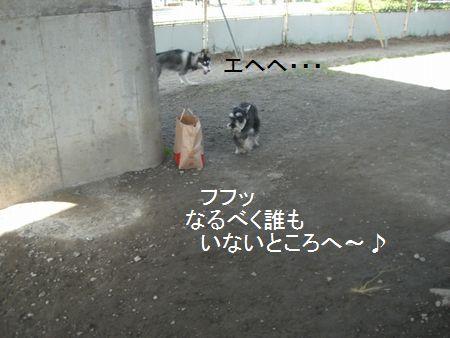 f0197317_1543941.jpg