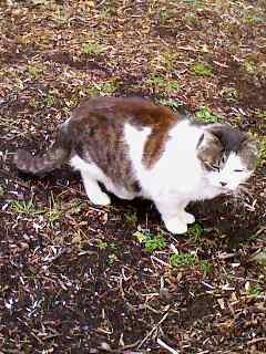携帯で撮った猫_e0089232_20592469.jpg