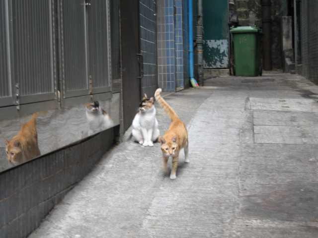 2009年2月香港旅行⑥ ウフフな香港_e0052736_23181661.jpg