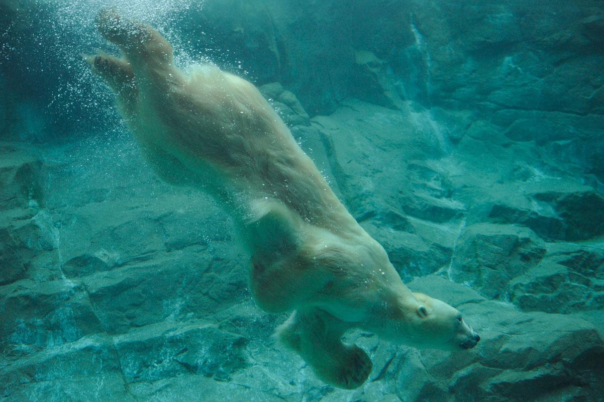 水中遊泳な気分_b0023856_185861.jpg