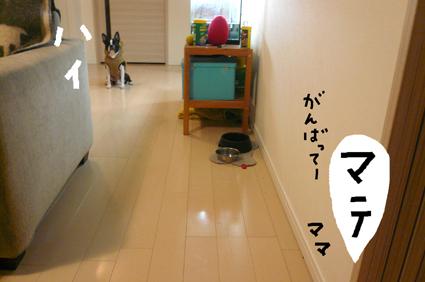 f0170072_231111.jpg