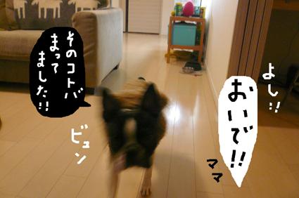 f0170072_2314047.jpg