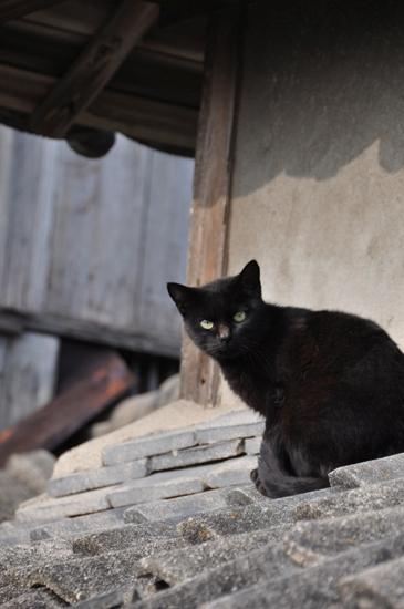 島猫写真~男木島・女木島の猫_e0171573_0192160.jpg