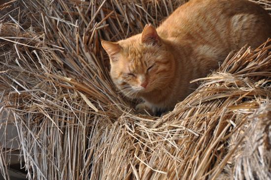 島猫写真~男木島・女木島の猫_e0171573_0194128.jpg