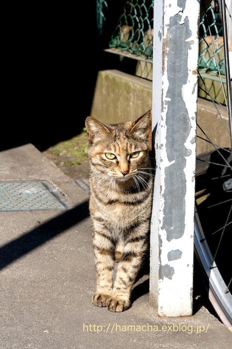Stray Cat_c0158775_19334856.jpg