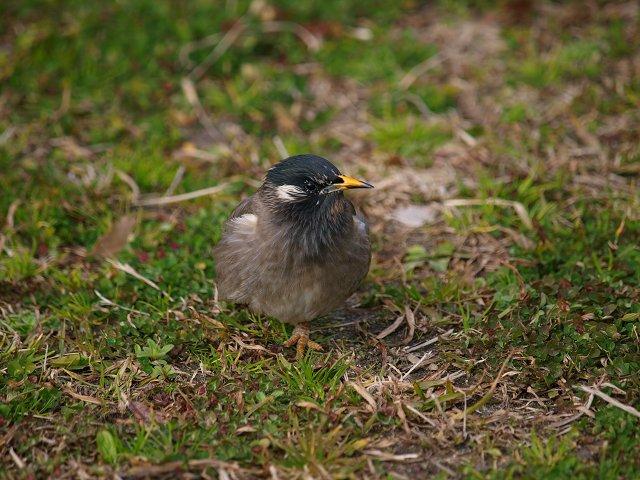 鶴見緑地公園 その2 (鳥さん)_c0187587_19373457.jpg
