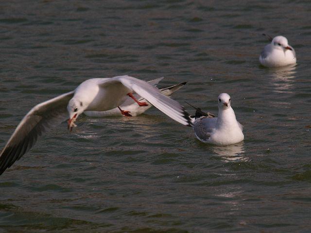 鶴見緑地公園 その2 (鳥さん)_c0187587_19435517.jpg