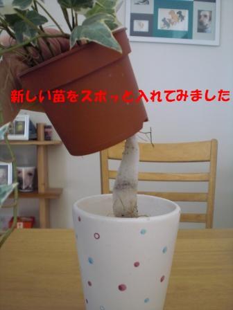 c0196992_757551.jpg
