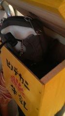 全世界の家庭に一個づつ、『ヒノデカニの牛乳受け箱』!!【牛乳受け箱の場合】_c0123295_1354897.jpg