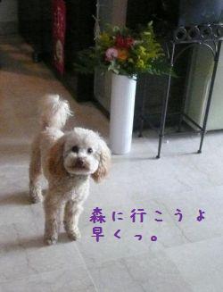 b0141898_130436.jpg