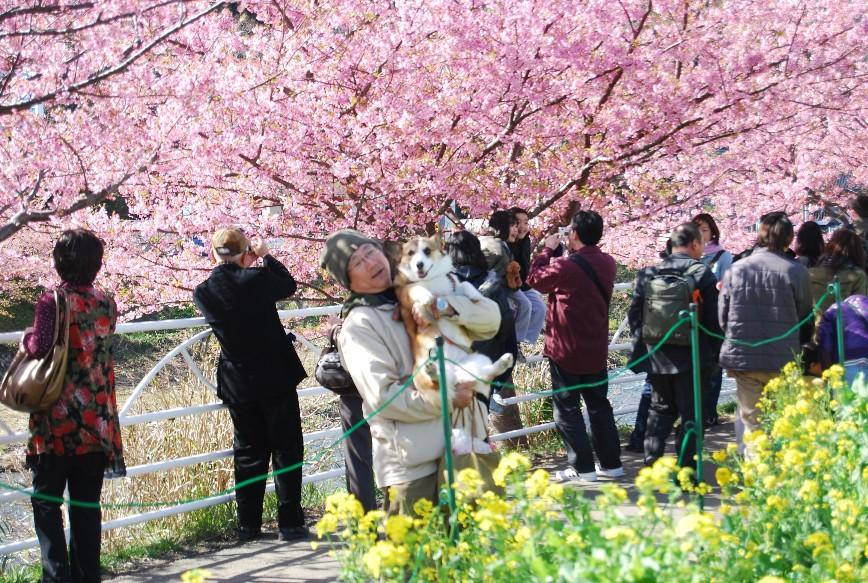 河津は春!!春!!_f0101201_22102330.jpg