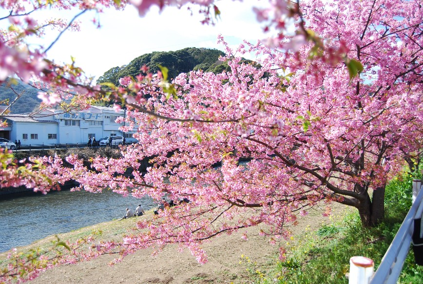 河津は春!!春!!_f0101201_22174797.jpg