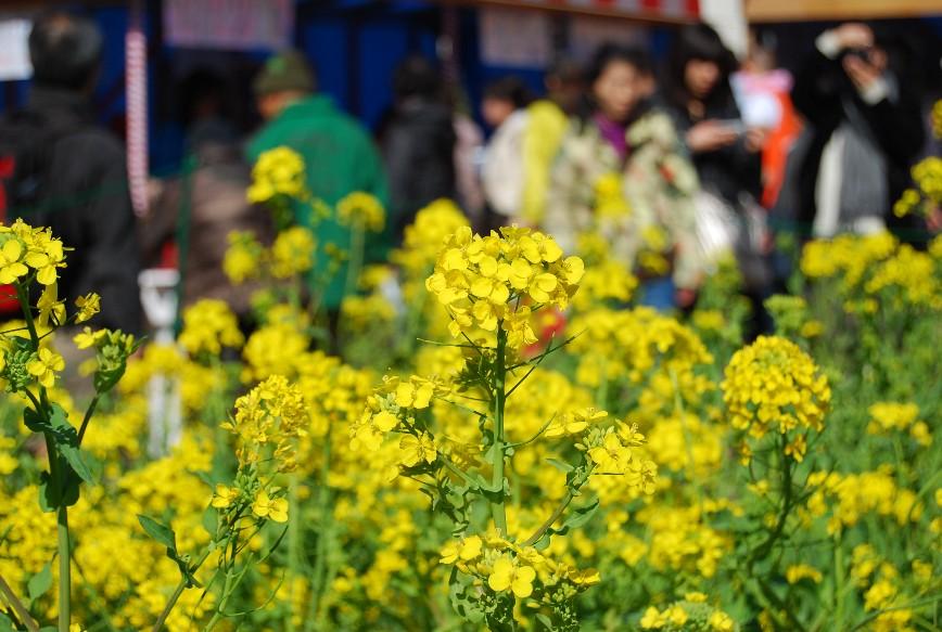 河津は春!!春!!_f0101201_22182118.jpg
