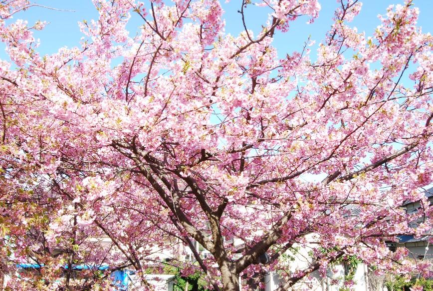 河津は春!!春!!_f0101201_22184651.jpg