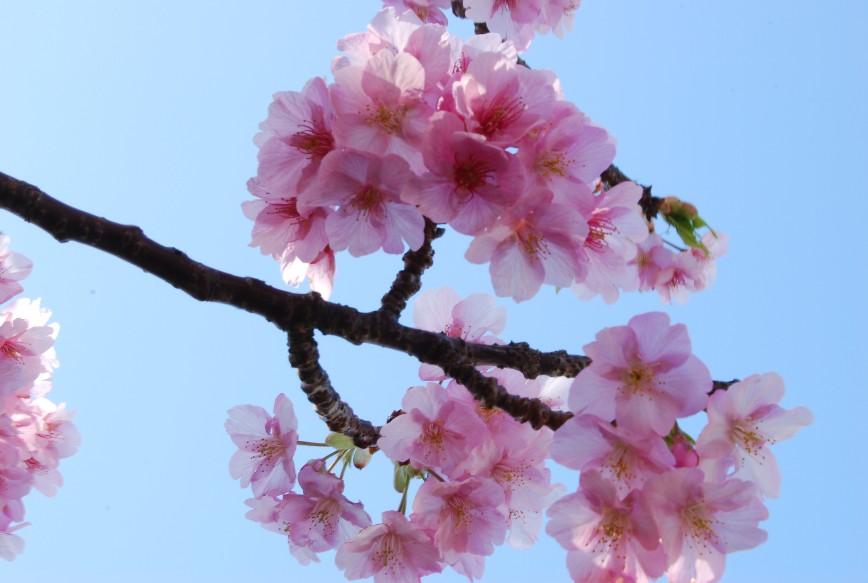 河津は春!!春!!_f0101201_22192151.jpg