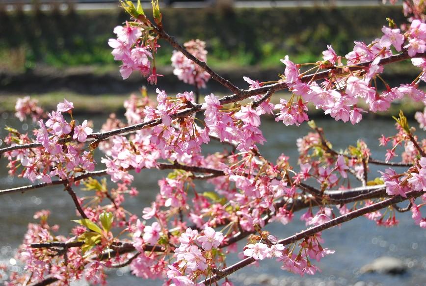 河津は春!!春!!_f0101201_22201830.jpg