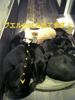 f0148927_170392.jpg