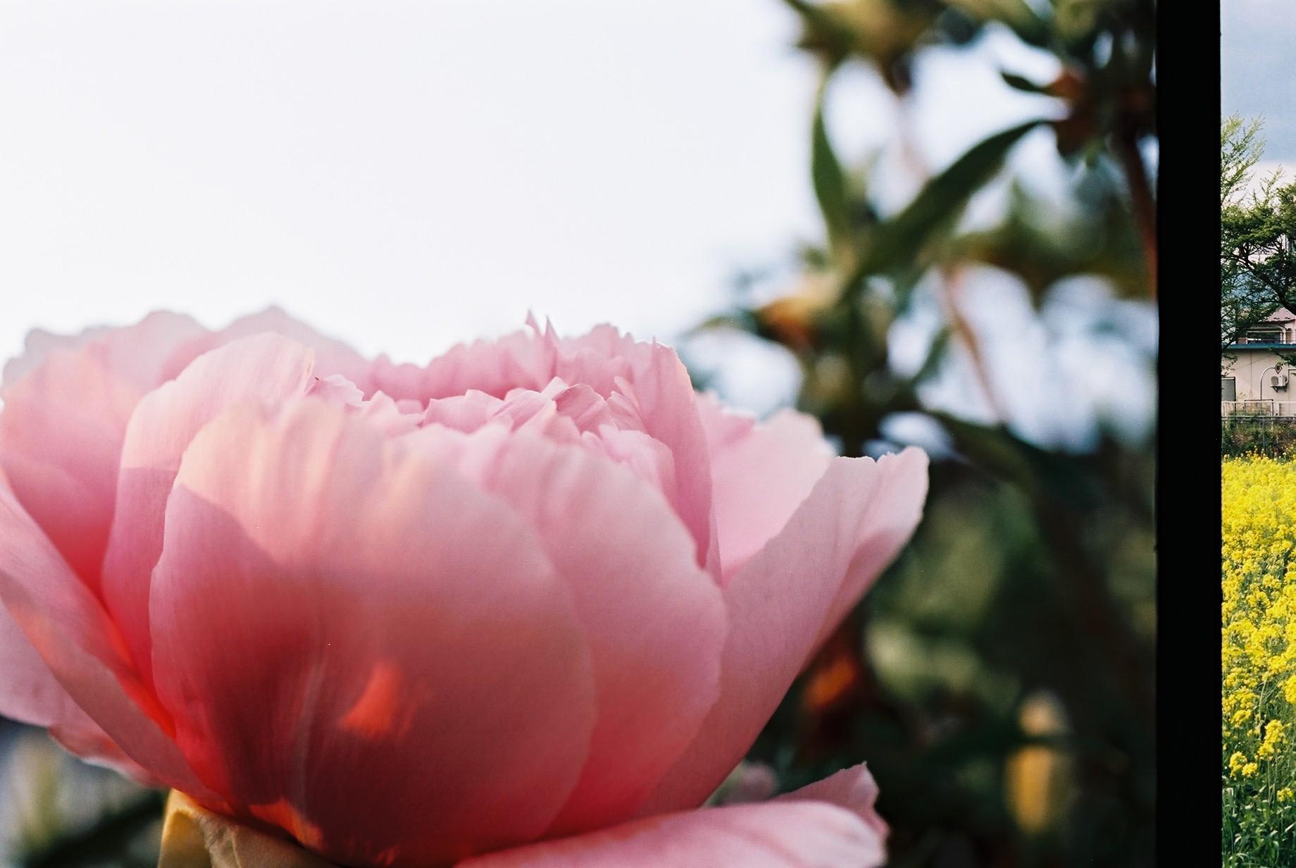 寒い日に…花10_a0103650_12442622.jpg