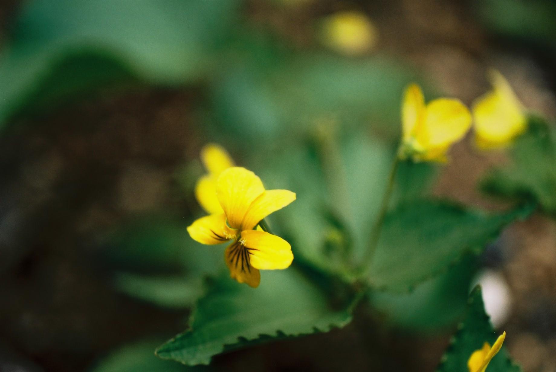 寒い日に…花10_a0103650_12451889.jpg