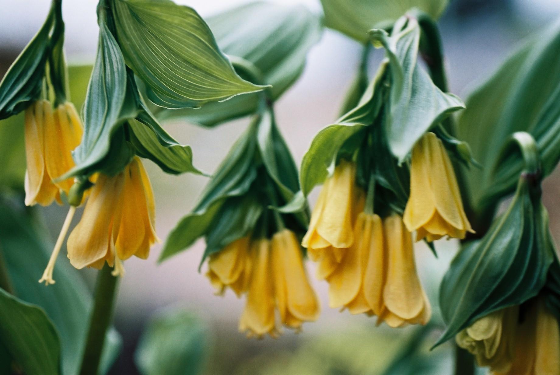 寒い日に…花10_a0103650_12453635.jpg