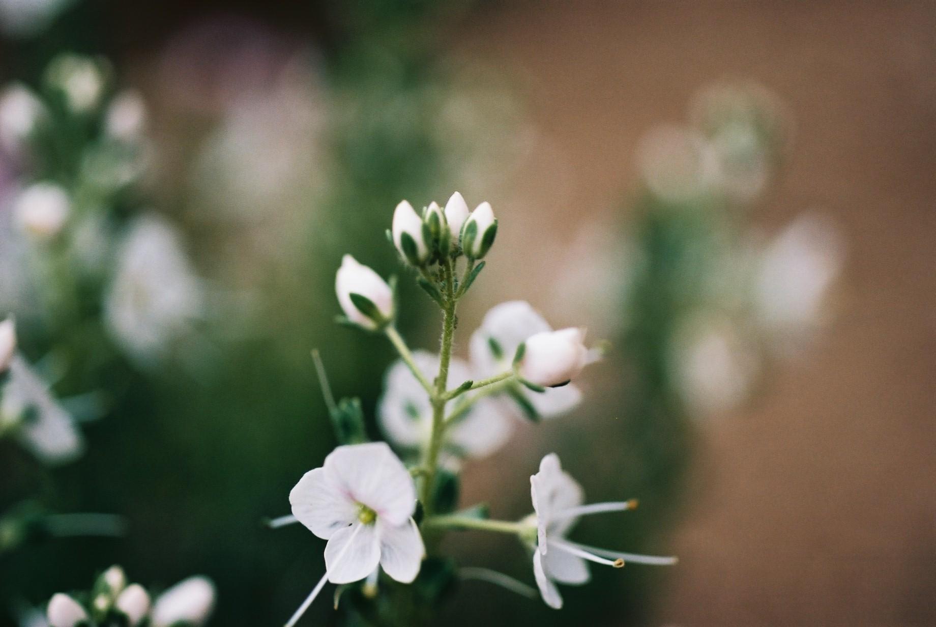 寒い日に…花10_a0103650_12461260.jpg