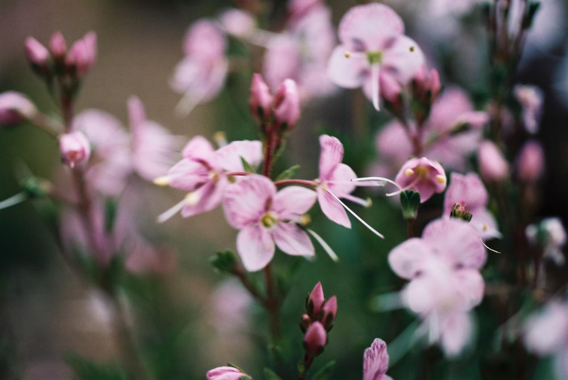 寒い日に…花10_a0103650_12462121.jpg