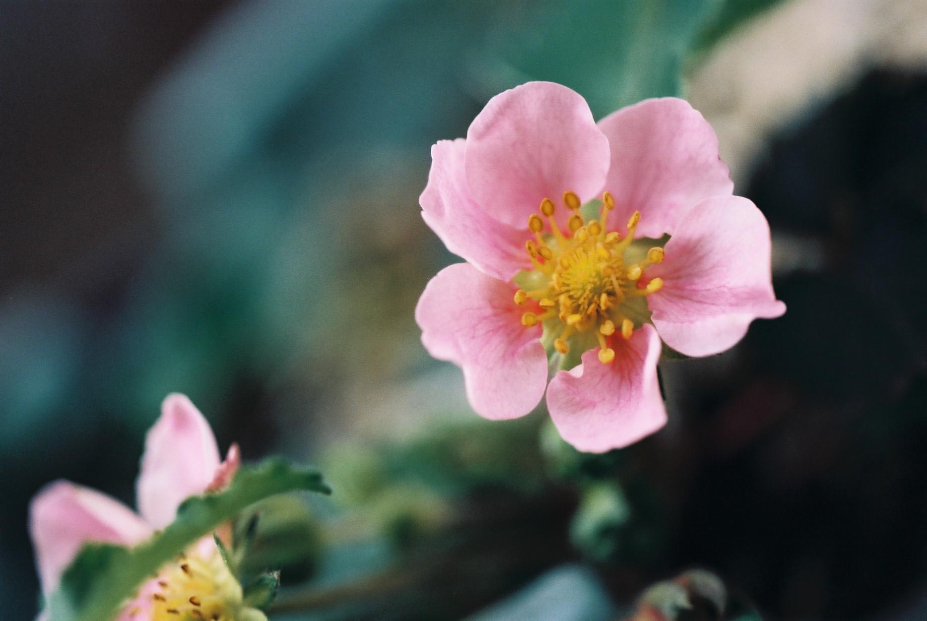 寒い日に…花10_a0103650_12462930.jpg