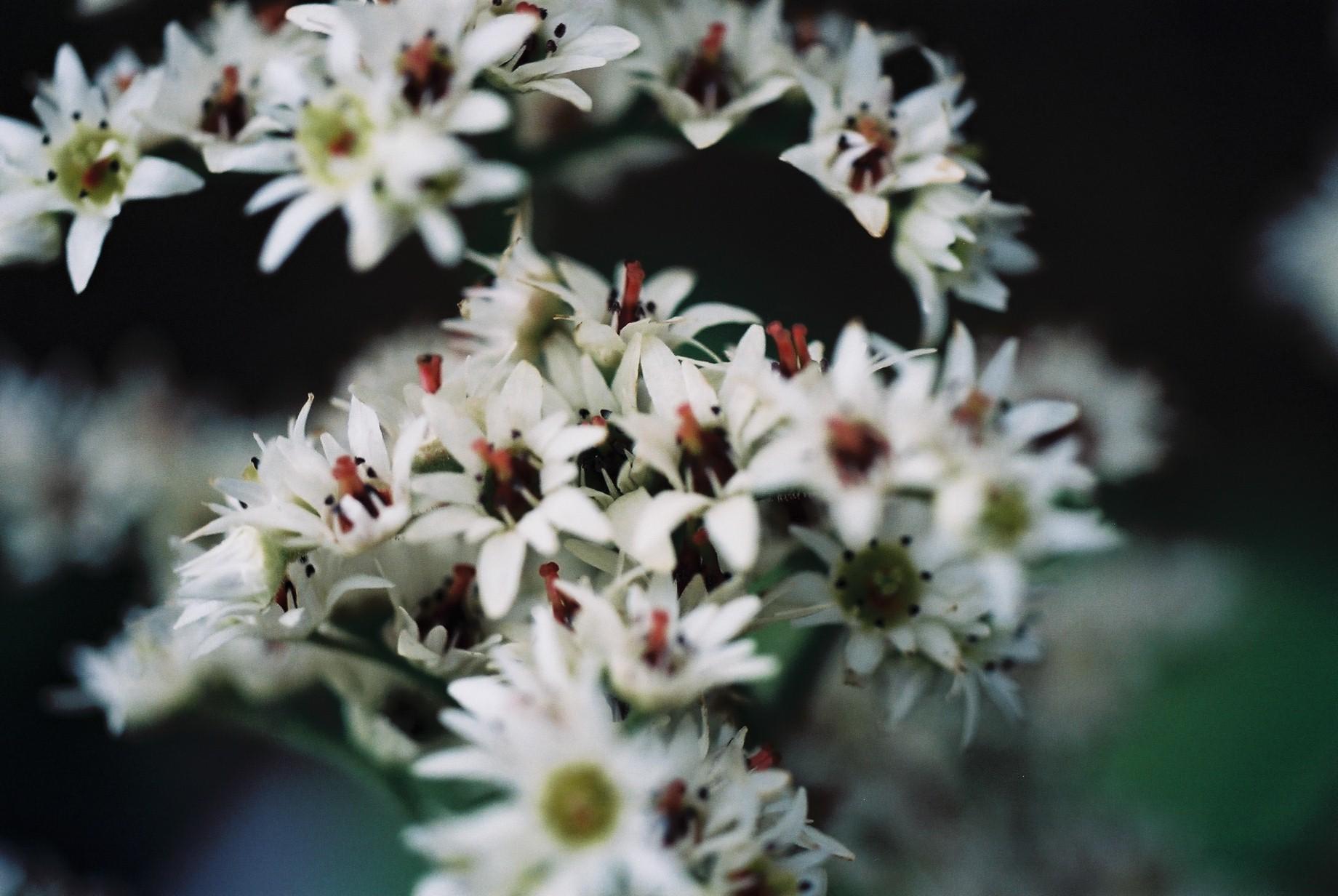 寒い日に…花10_a0103650_12463897.jpg
