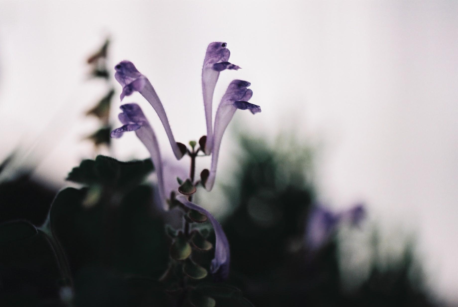 寒い日に…花10_a0103650_12464619.jpg