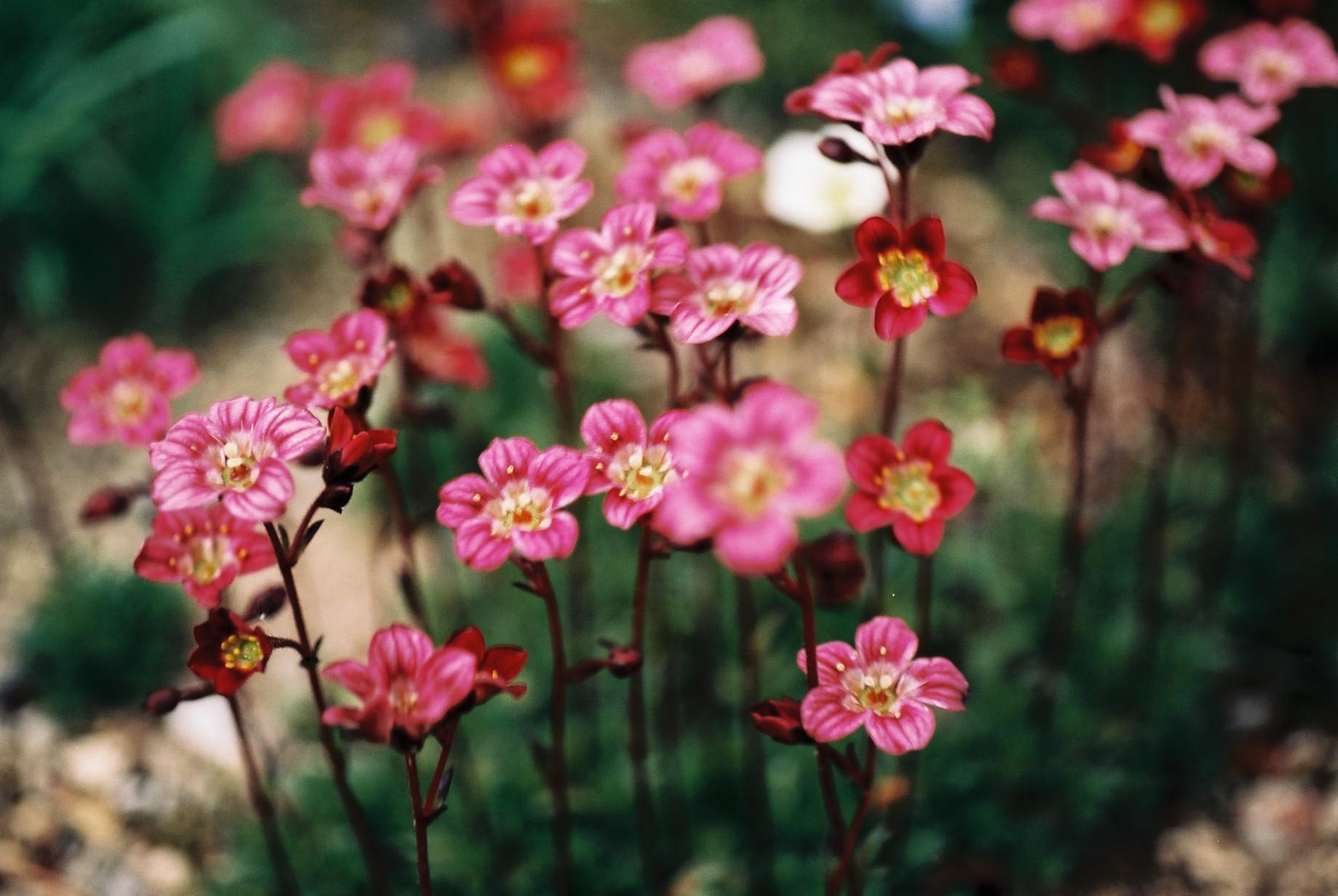 寒い日に…花10_a0103650_12471452.jpg