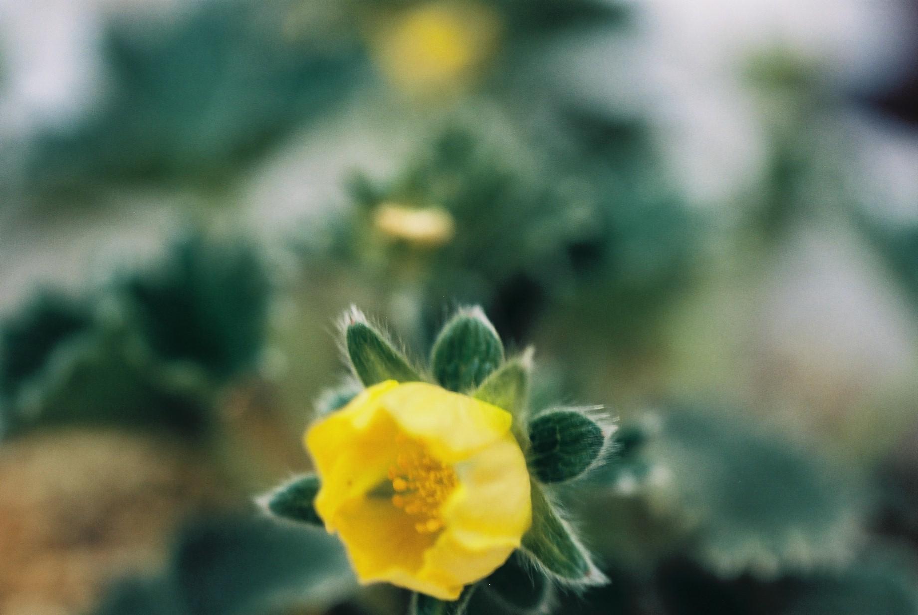 寒い日に…花10_a0103650_12472292.jpg