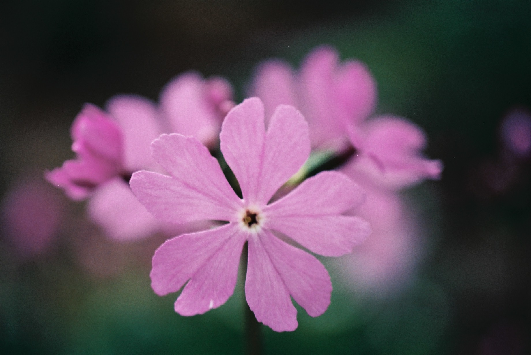寒い日に…花10_a0103650_12473064.jpg