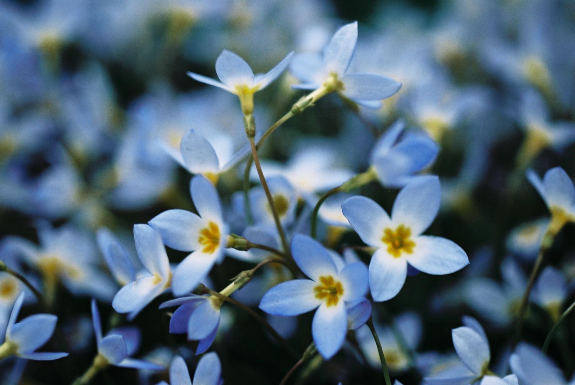 寒い日に…花10_a0103650_12473982.jpg