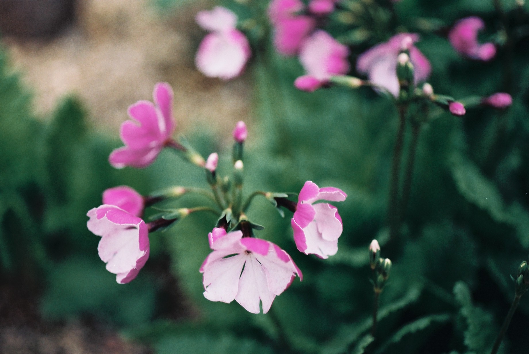 寒い日に…花10_a0103650_1247477.jpg