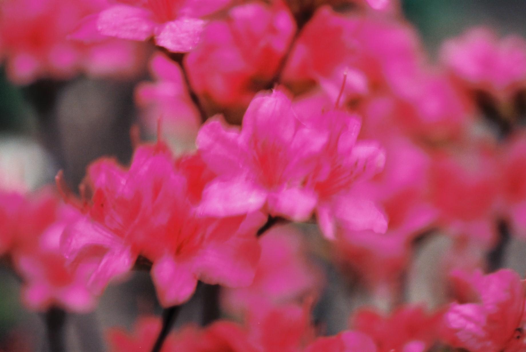 寒い日に…花10_a0103650_12475689.jpg