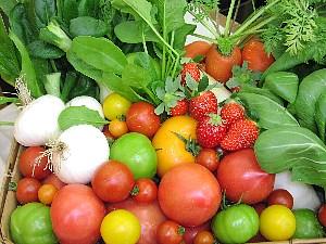 トマトがたくさん出荷されています。_c0141652_9283255.jpg