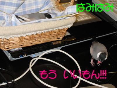 b0158061_2263546.jpg