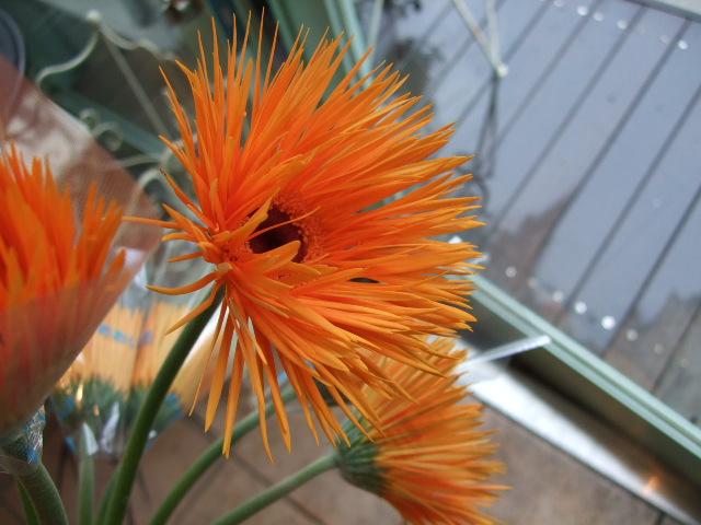 オークリーフ(白い忘れな草の花)_f0049672_14391910.jpg